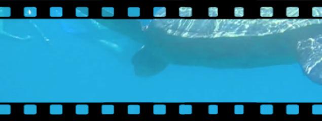 Schildkröte vor Molokini Island