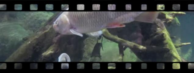 Sea Life München 2009