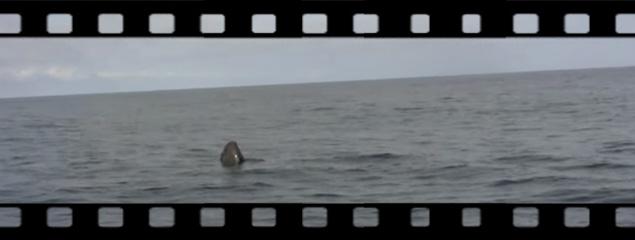 Neugieriger Pottwal vor Faial, Azoren