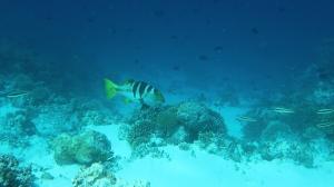 Manueller Weißagbleich unter Wasser - AWB automatischer Weißabgleich