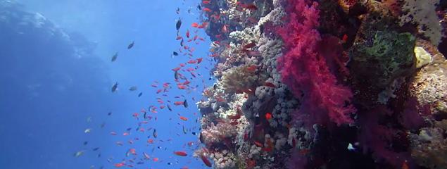 Schöne Farben bei Unterwasseraufnahmen