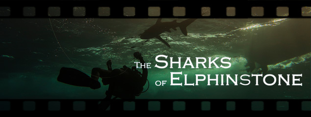 The Sharks of Elphinstone – Tauchen in Ägypten